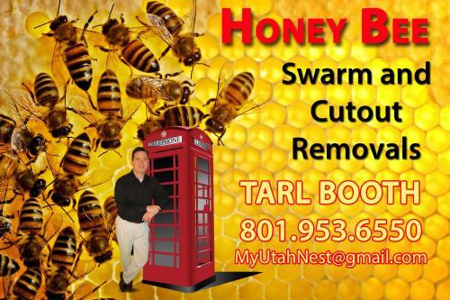 Swarm-Removals2015