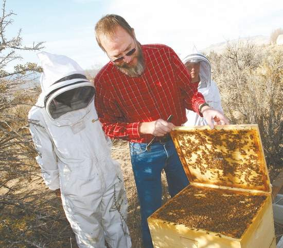 James Ellis Northern Nevada Beekeeper is happy to pick up honeybee swarms in and around Carson City, Nevada